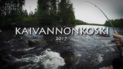 Kaivannonkoski kesäkuu 2017