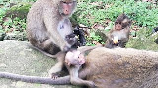 Why does big monkey do like this with a baby monkey? baby monkey want to eat but big monkey angry