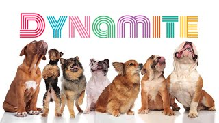 BTS - Dynamite | Dogs Puppies Cats Animal Cover | Song Army