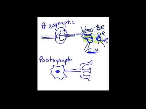Presynaptic vs. Postsynaptic Inhibition