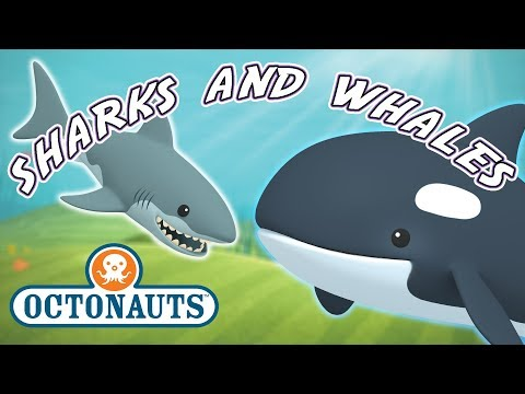 Octonauts - Whales And Sharks | Cartoons For Kids | Underwater Sea Education