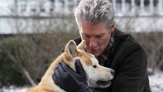 Хатико. История верности и любви. Правда про собаку.