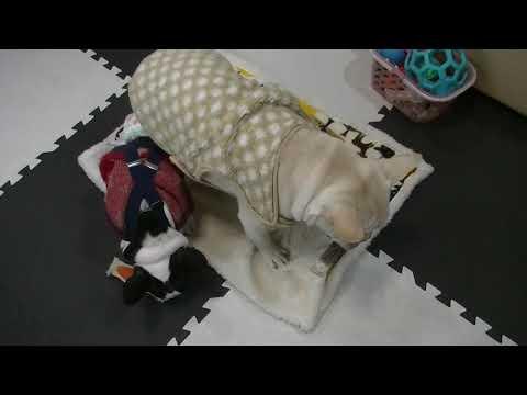 ここまで五郎の事が好きな犬を他に知らないI do not know other dogs that I like about Goro so far!