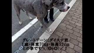 この動画は、H25年10月29日(火)に栃木県日光市の中禅寺湖を散歩中に撮...