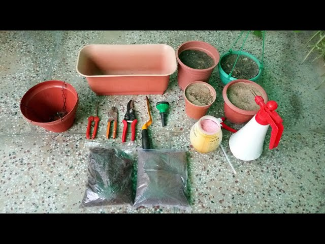 Start your own terrace garden at home for beginners in Hindi