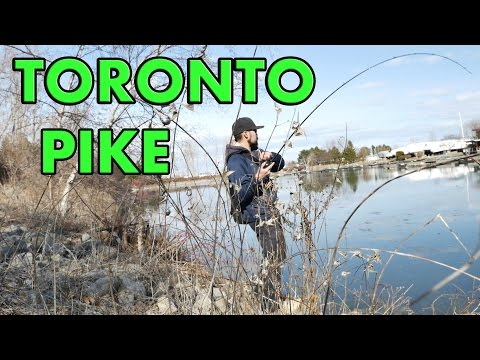 Toronto Urban Pike Shore Fishing