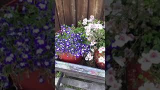 #Shorts - срочные работы осенью в саду и огороде