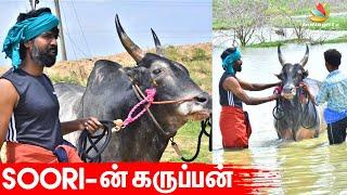 Jallikattu Kaalai, Madurai, Lockdown, Thalaivar 168