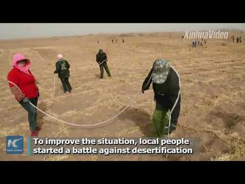 Chinese tree planters greening desert