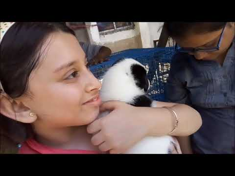 Cute Baby Adopt A Cute Puppy At Galiff Street Kolkata