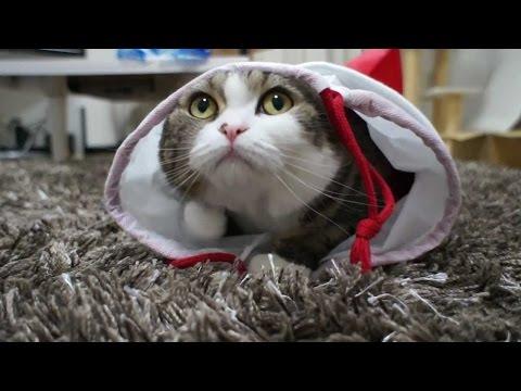 Приколы с котами. Смешная подборка #8 / 2015