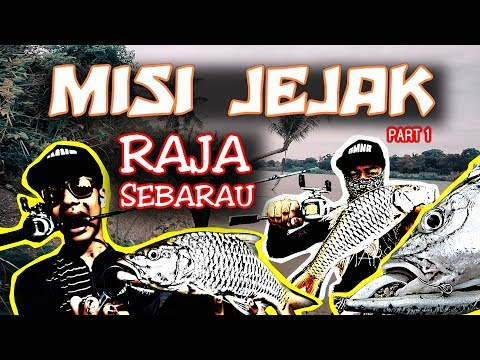 Misi Jejak Raja Sebarau / Part 1 / Sungai Perak / Casting Ikan Sebarau / Hampala Macrolepidota