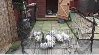 Rabbit Recall & Rabbit game of tag