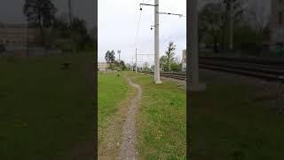 Тропинка у железной дороги. #shorts