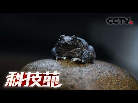 《科技苑》搭架改食谱 巧招养石蛙 20190124CCTV农业