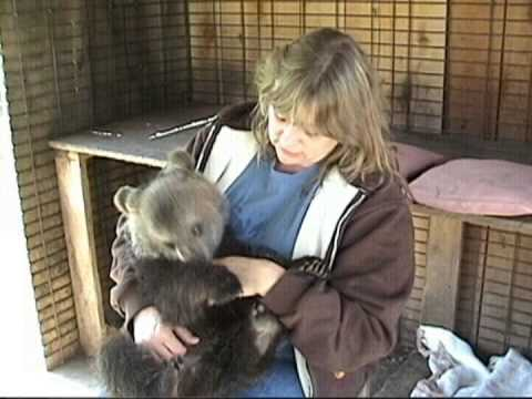 GRIZZLY BEAR CUB and her Handler Bonding