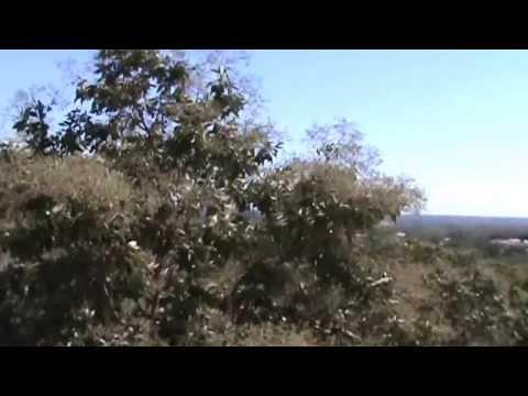 EL NORTE - FENOMENO NATURAL EN PIJIJIAPAN CHIAPAS MEXICO