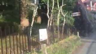 長崎県長崎市 シーボルト記念館に行ってみた動画です。
