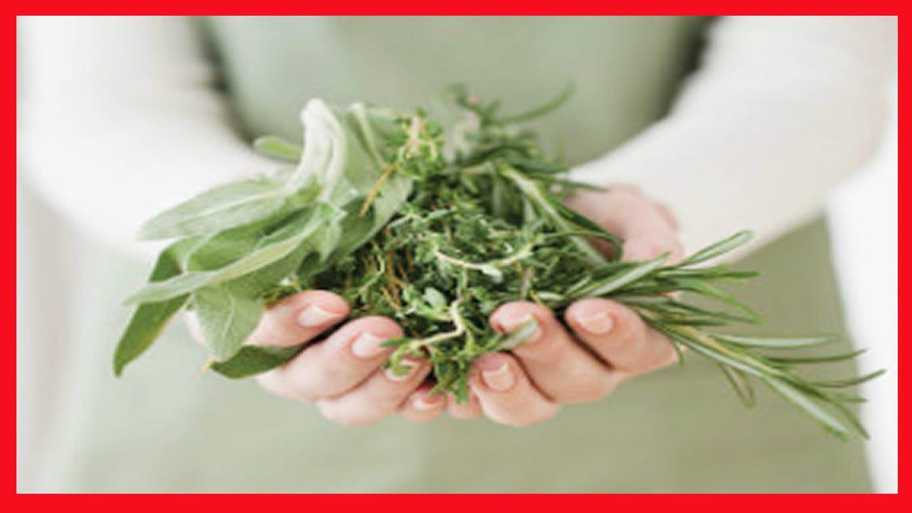 como tratar impotência sexual em diabéticos 3 poderosas ervas