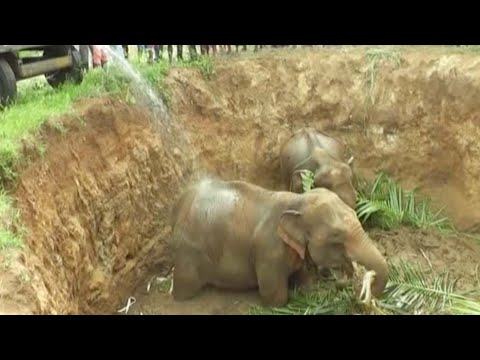 Elephants Rescued From Deep Well