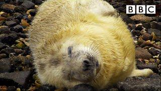Best of British Wildlife  27.10.2020  BBC