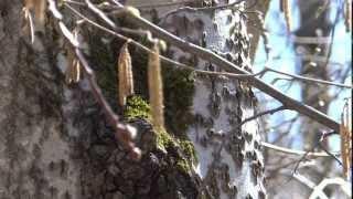 Весна в Зеленограде /часть 2/ - АПРЕЛЬ