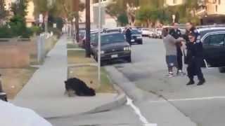 Chú chó bị cảnh sát bắn chết vì cố gắng bảo vệ chủ