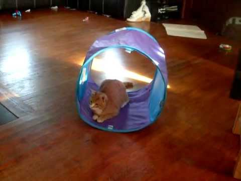 Funny Dog and Cat Video Doberman pincher and kitten pet humor