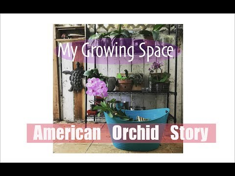 My Orchid Growing Space in Los Angeles.