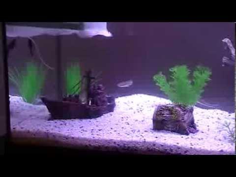 Acquario 60 litri aquatlantis di acqua dolce con pesci for Pesci per acquario tropicale