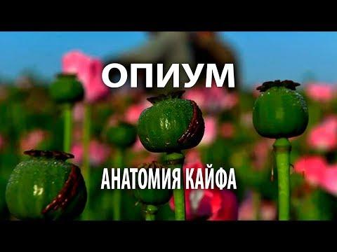 Опиум: анатомия кайфа