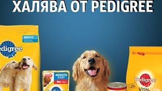 ХАЛЯВА Корм для собак !
