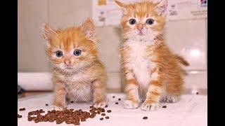 Смешные котята || Бездомные животные || Отдадим котят в хорошие руки