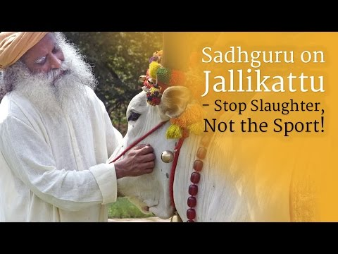 Sadhguru on Jallikattu - Stop Slaughter, Not the Sport!