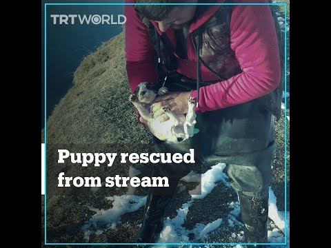 Puppy rescued from ice-cold stream