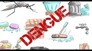 World malaria day Dengue Mosquito Symptoms | Yellow Fever Mosquito | Aedes Aegypti