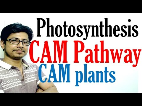 CAM pathway photosynthesis