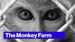 PETA Wants to Take Down This Florida Monkey Farm