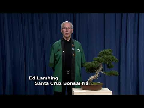 Public Service Announcement: Santa Cruz Bonsai Kai's 30th Annual Bonsai Show