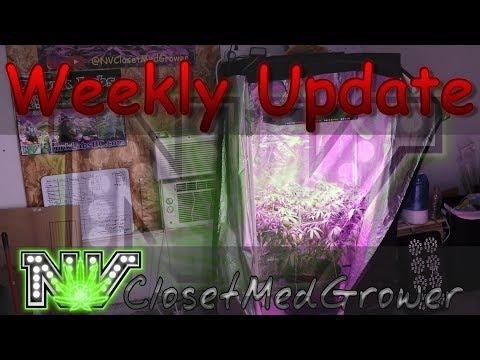 Weekly Update 6/22/2017