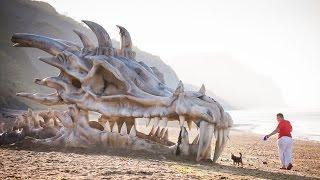 Strange Beach Discovery