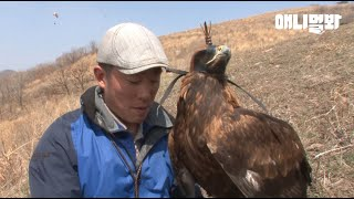 Man Who Gave A Sky To A Golden Eagle Who Couldn't Fly For 8 Years