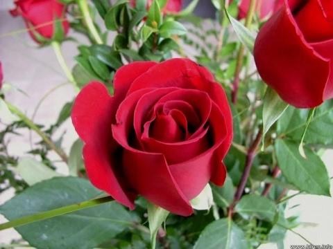 Good morning 2017 flowers whatsapp video