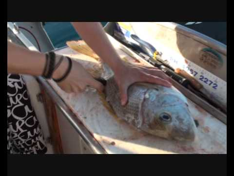 How To Fillet Fish The Easy Way