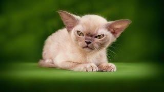 Ударный отряд котят 4 - Милые боевые котики :3