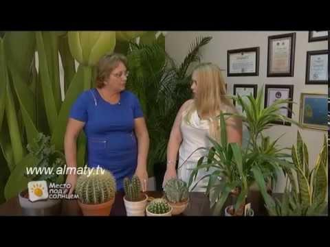 Фэншуй и кактусы