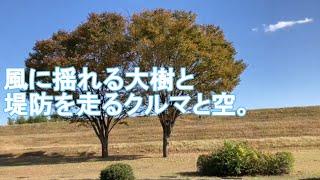 BLU-SWING - 木と空