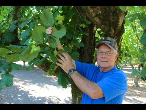 Hazelnut Growing Practices with Don Blake