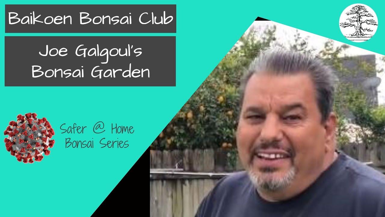 Joe's Bonsai Garden