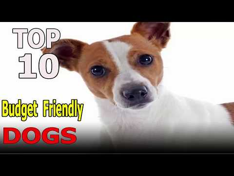 Top 10 Budget Friendly Dog Breeds | Top 10 animals